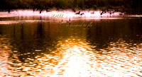 Powderhorn_Park-2696 | image from gallery: On Golden Pond
